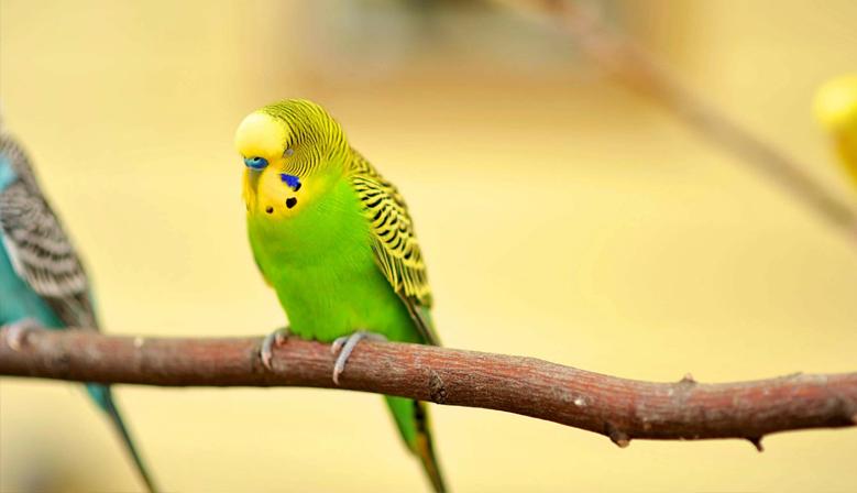 Mangimi Ornitologici