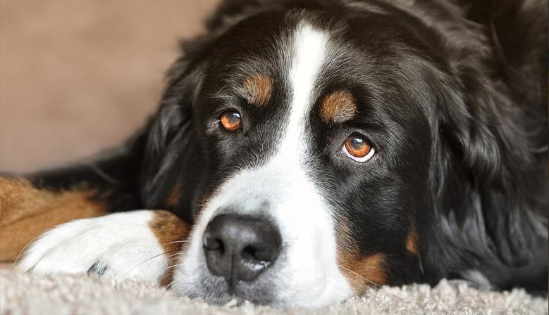 Mangimi, antiparassitari e accessori per cani
